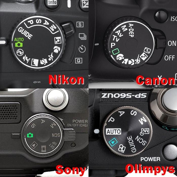 Фотоаппарат и животные картинки пилоне