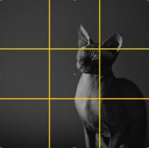 Снимок кота по правилу-третей