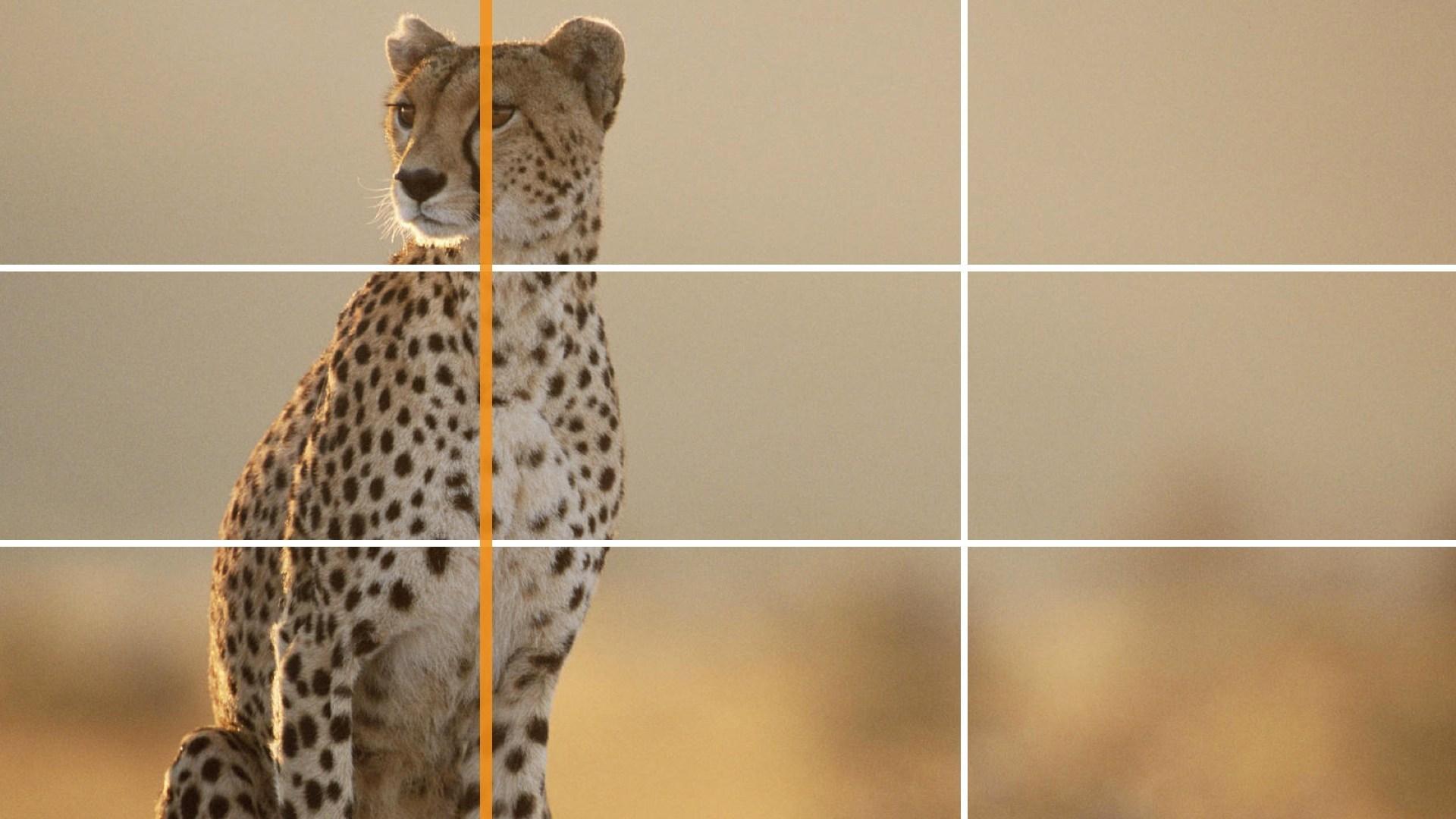 Как использовать правило третей в фотографии