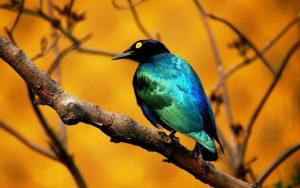 Цветовой фотоконтраст в фотографии