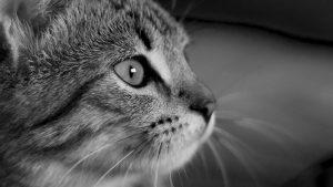Как делать чёрно-белую фотографию