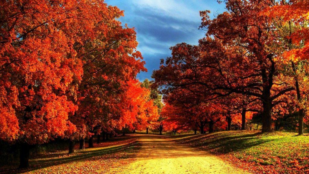 Особенности фотосъёмки осенью