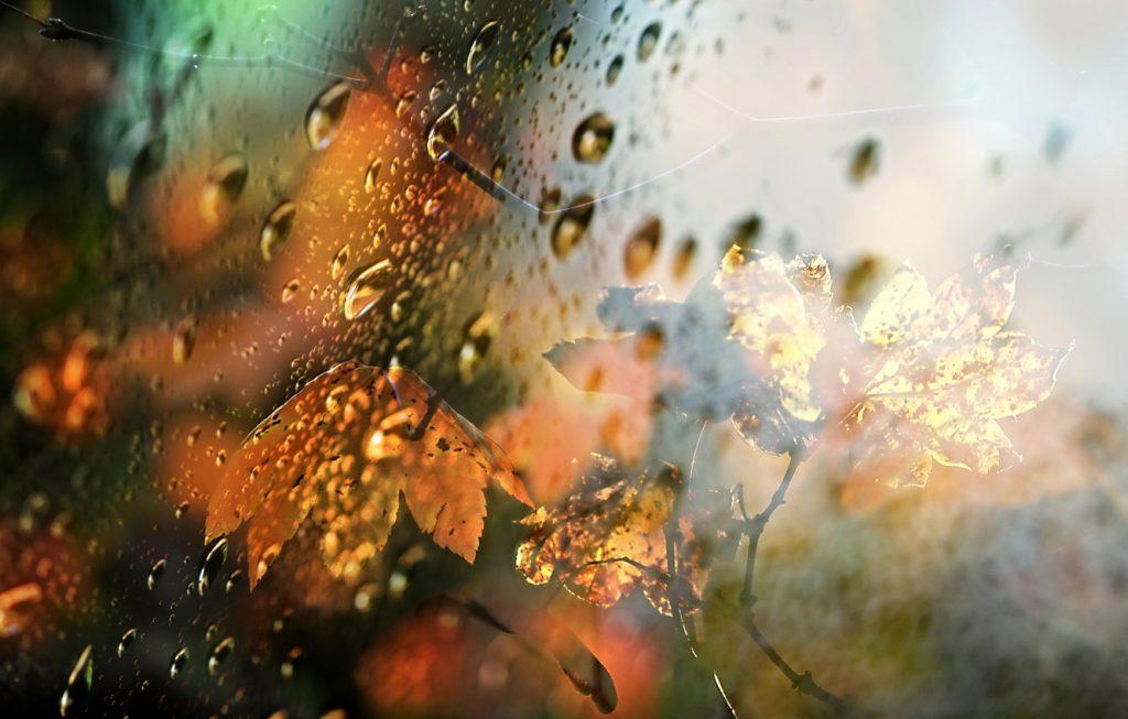 Приёмы фотосъёмки осенью
