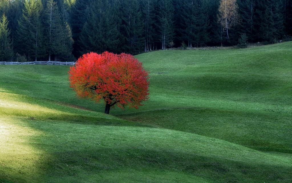 Пропорции контрастных цветов